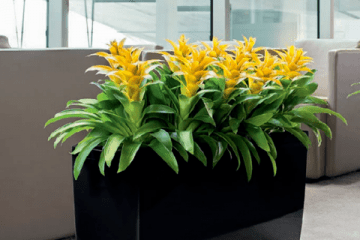 Plant Display Hire