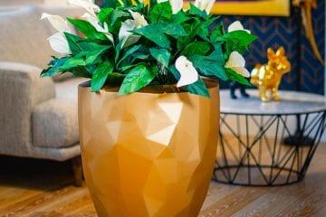 Indoor Plant Displays & Containers