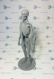 Анатомические 3D модели под 3D печать
