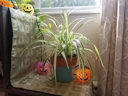 Top 5 spooky indoor plants