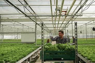 Best Greenhouse Carts