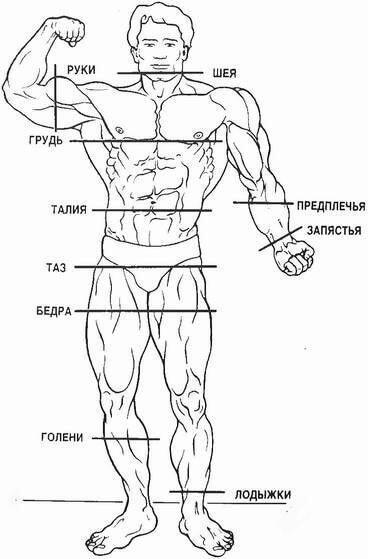 Идеальные пропорции тела и мышц