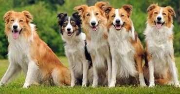 cosas curiosas sobre perros