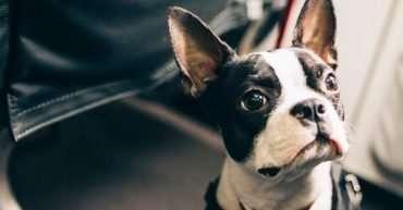 viajar en avión con perro