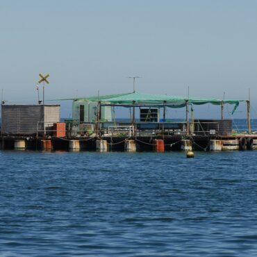 El gobierno prepara una estrategia para impulsar la acuicultura de 2021 a 2030