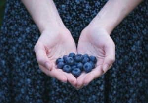 Hands full of blueberries