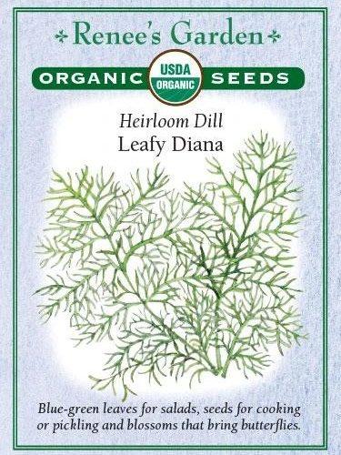 Heirloom Dill Leafy Diana