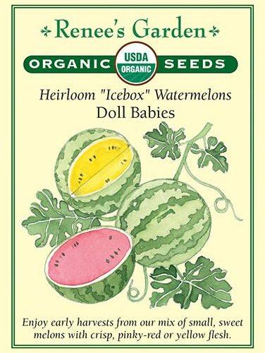 Heirloom Icebox Watermelons Doll Babies pack