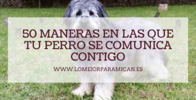 50 maneras en las que tu perro se comunica contigo