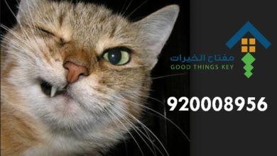 Photo of افضل شركة صيد قطط شمال الرياض 920008956