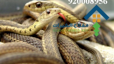 Photo of افضل شركة مكافحة الافاعي غرب الرياض 920008956