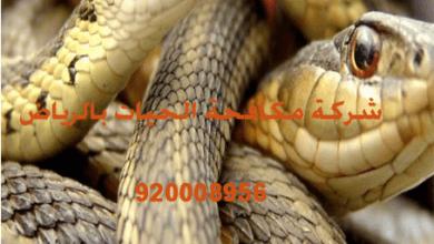 Photo of شركة مكافحة الحيات بالرياض 920008956