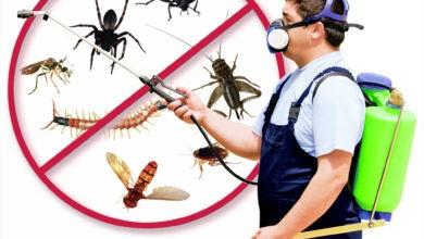 Photo of شركة مكافحة حشرات بسدير 920008956