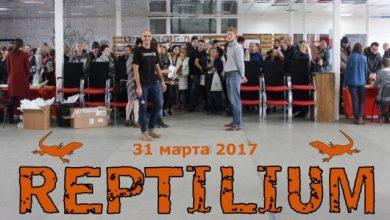 "Photo of Выставка ""Рептилиум"" 31 марта Выставка ""Рептилиум"" в Москве 31 марта Выставка ""Рептилиум"" 31 марта fLxIGJBvwz8 390x220"