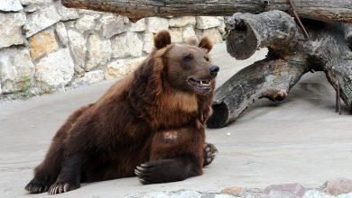 Photo of В Московском зоопарке проснулись медведи В Московском зоопарке проснулись медведи В Московском зоопарке проснулись медведи 1 14 390x220