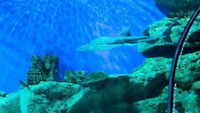 Photo of «Москвариум»: водный курорт для москвичей Москвариум «Москвариум»: водный курорт для москвичей                      390x220