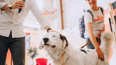Photo of О кошках, собаках, приютах и благотворительности. Интервью с организаторами фестиваля Woof Fest woof fest О кошках, собаках, приютах и благотворительности. Интервью с организаторами фестиваля Woof Fest YJ7lzTsAr 4 390x220