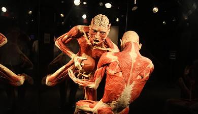 Zamyšlení | Mezi vědou a etikou - projekt Farma těl, výstava Bodies