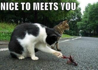 Nice-to-meet-you