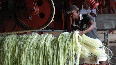 Image: man processing sisal