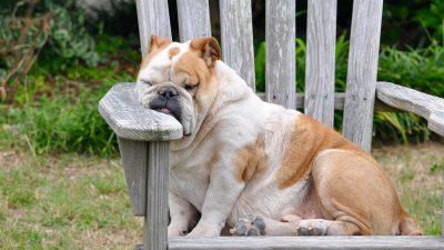 Image: Dog taking a rest