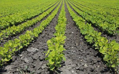 L'ozone dans le secteur agricole
