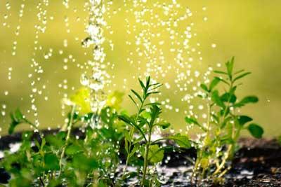 Regen Gießen Wasser Pflanzen Bio Anwendung Dünger