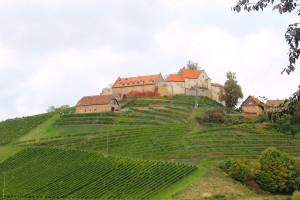 Burg Staufenberg inmitten von Weinbergen