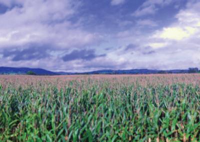 Olander Farms