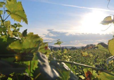 Séminaire dégustation Bourgogne