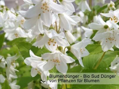 Bild / Bilder von Blumen mit Dünger Blumendünger -a