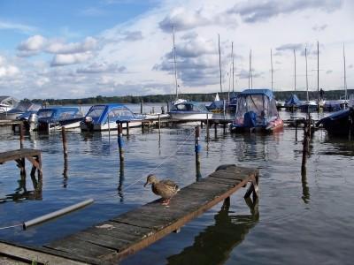 Alter Bootssteg an einem Binnengewässer mit darauf laufender Ente, dahinter Bootsstege mit Motor- und Segelbooten
