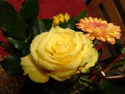 bloem gele roos in mooi blader