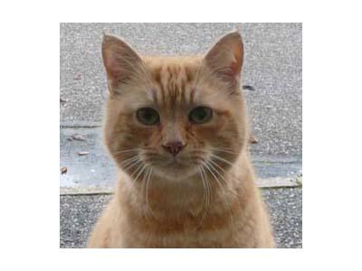 ecole-du-chat