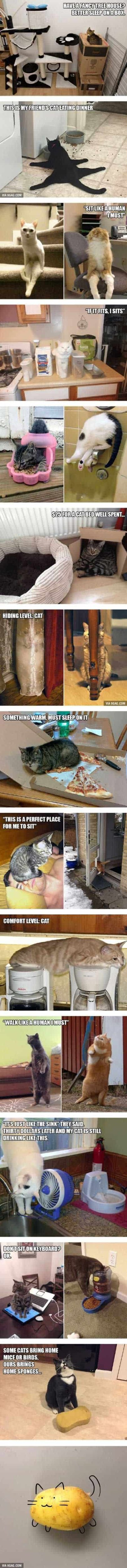 22 Funny animal Humor are here!!