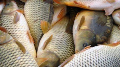 Boldog hal – elégedett fogyasztó: a Happy Fish projekt zárókonferenciája