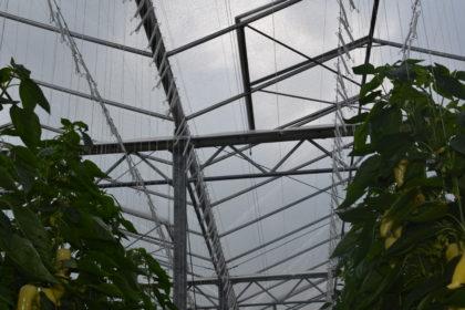 Még a nyár folyamán újranyílnak az üvegházak, fóliasátrak építését, valamint az ültetvények telepítését célzó pályázati felhívások