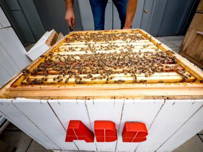 Méhek az adatelemzés szolgálatában