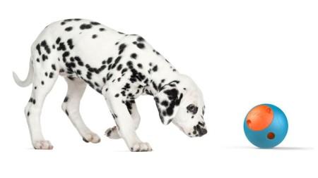 Foobler Interactivo - juguete para perros