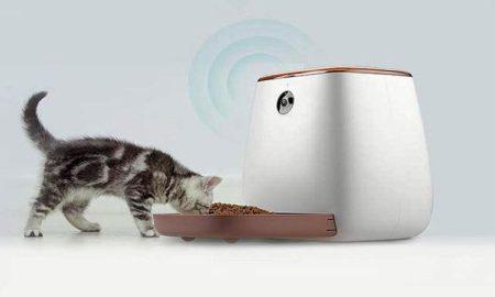 cual es el mejor comedero automático para gatos y perros