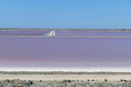 Camargue Saline