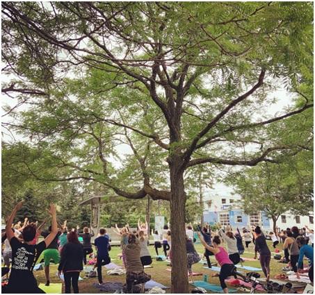 best yoga teacher training in ottawa