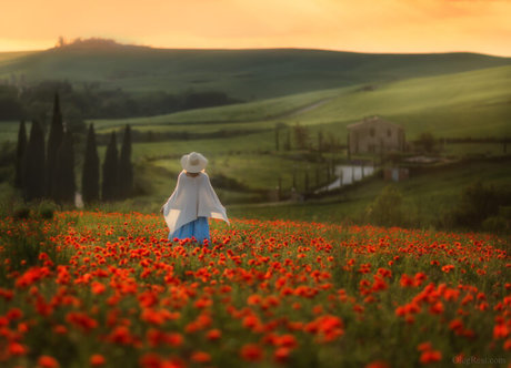 Poppies field Photography tour to Tuscany 2020 Oleg Rest