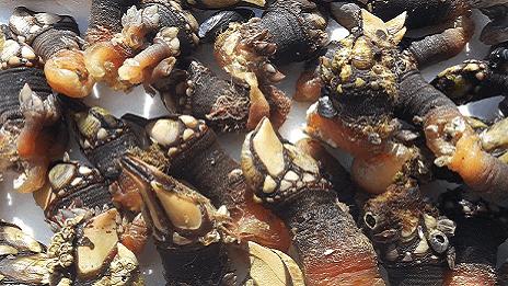 Empresa mayorista de mariscos en la ría de Vigo