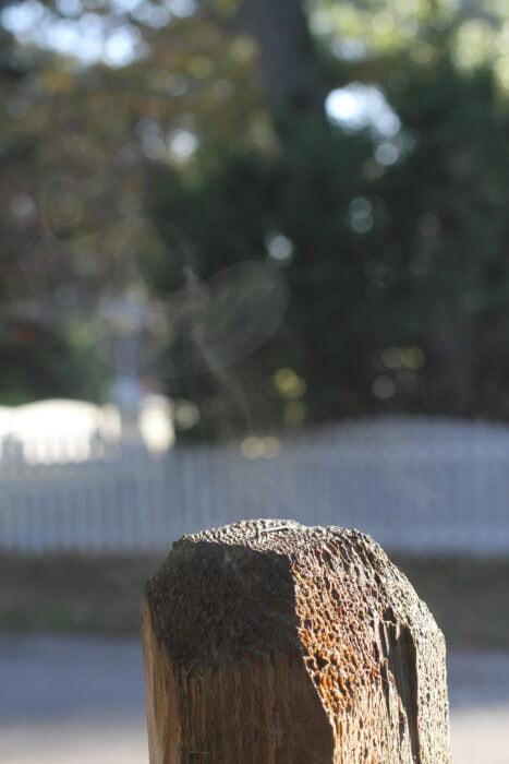 mist from wet fencepost