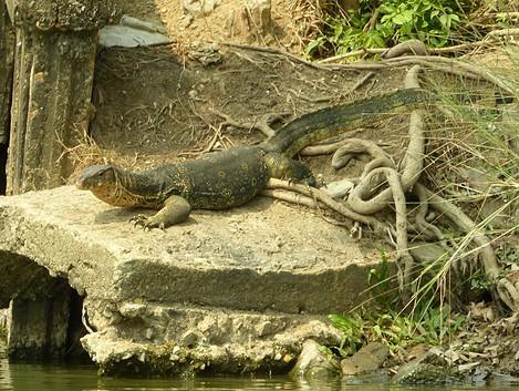 Bangkok Warane Lumphini Park