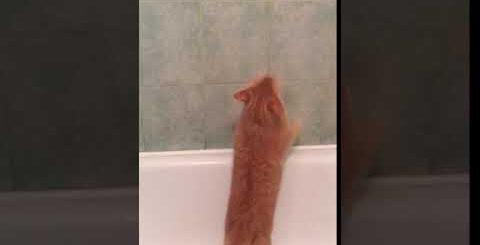 Умный рыжий кот убирает в доме? Прикол с домашним добрым котом Прикольный рыжий кот играет с шариком