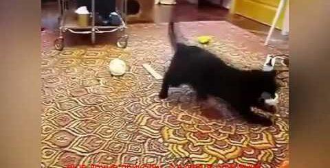 скачать видео приколы про животных
