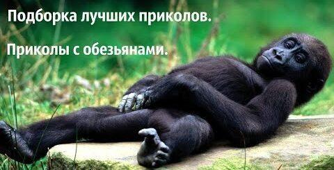 Приколы с обезьянами. Ржачная подборка приколов с обезьянами. Приколы 2016