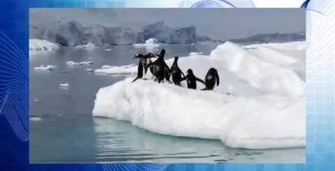 Приколы про пингвинов! :D